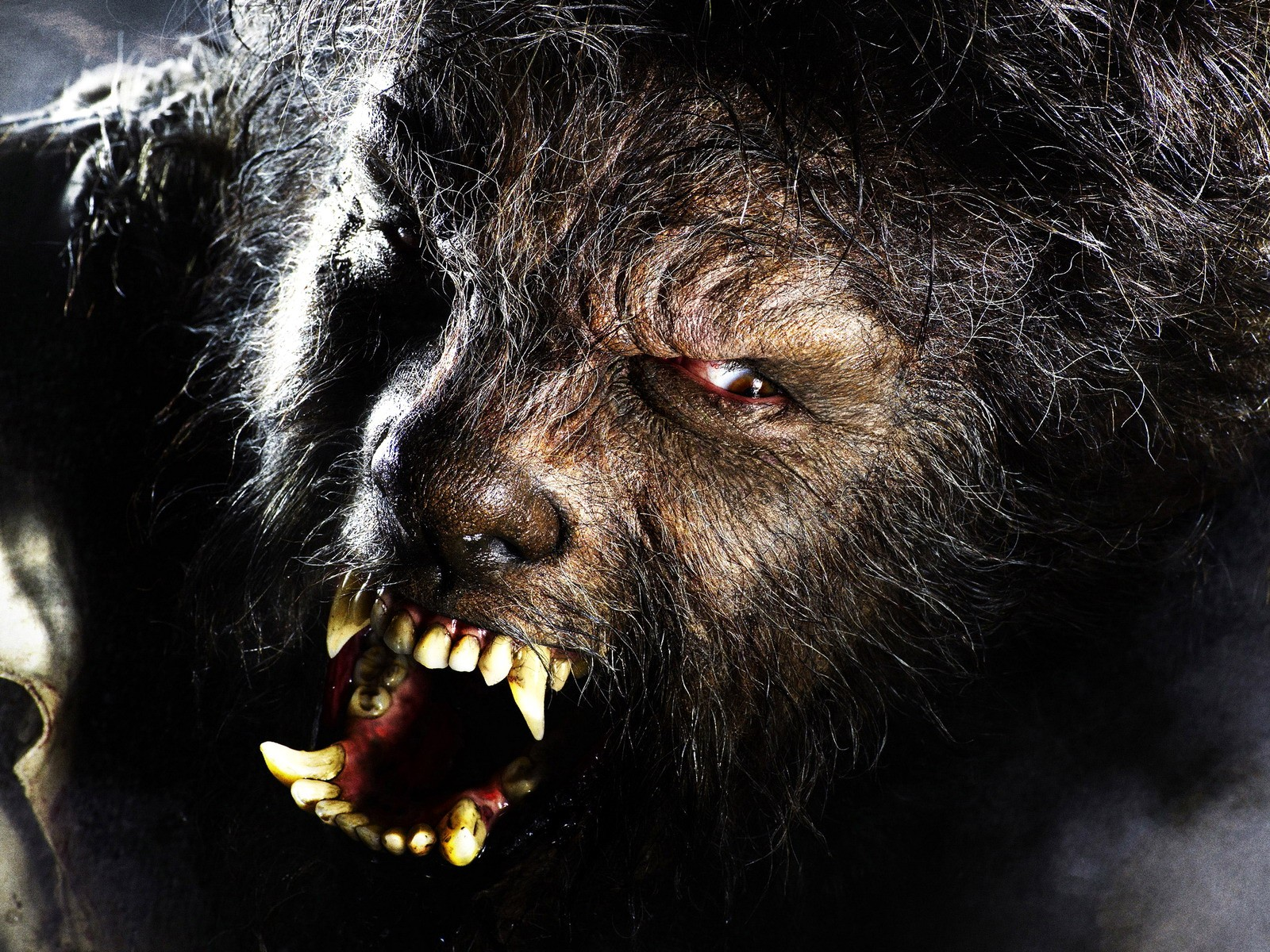 the wolfman pictures-wallpaper and posters